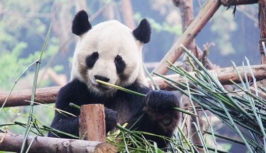最近流行っている洋楽ヒップホップの問題作「Panda (by Desiigner)」の踊り方